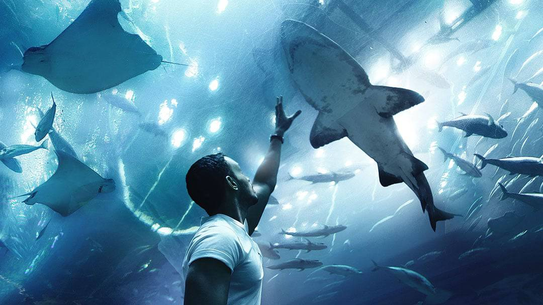 Put a Shark in Your Tank